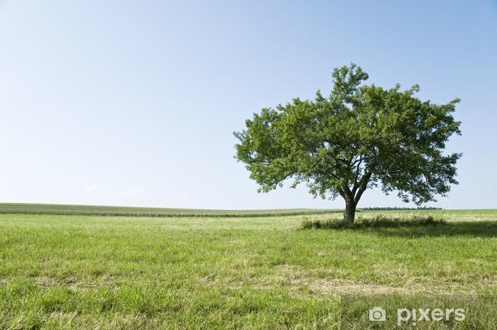 Naklejka Pixerstick Drzewo na łące - Drzewa