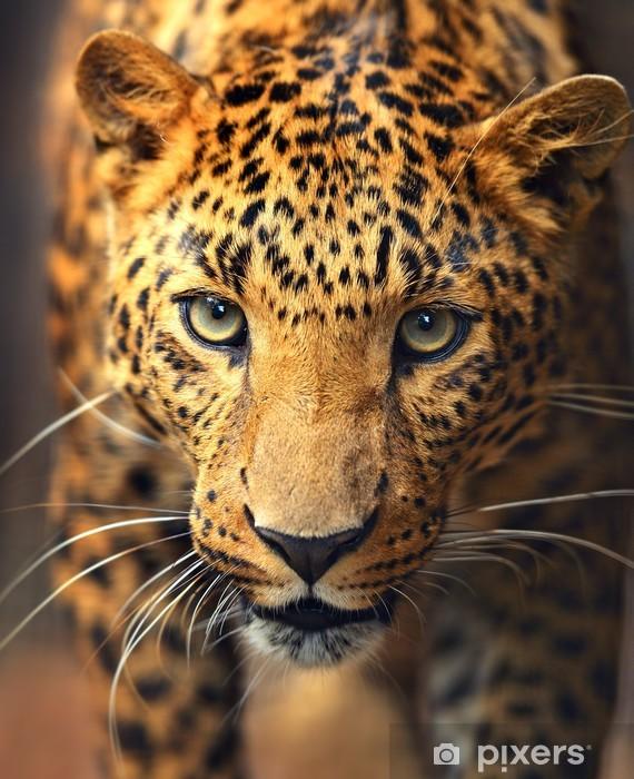 Nálepka Pixerstick Leopard portrét - Savci