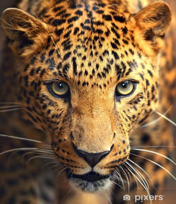 Naklejka na lodówkę Portret leopard - iStaging