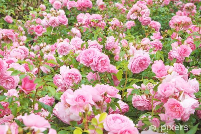 Pixerstick Aufkleber Englisch Rosenbusch - Haus und Garten
