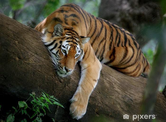 Naklejka Pixerstick Tygrys na drzewie - Tematy