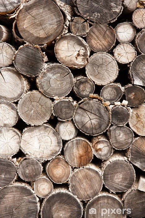 Fototapeta winylowa Stare drewno - Ekologia
