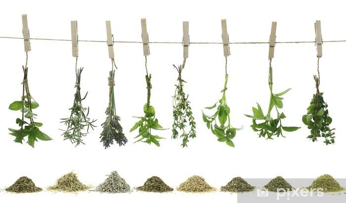 Fototapeta winylowa Świeże zioła wiszące na liny - Zioła