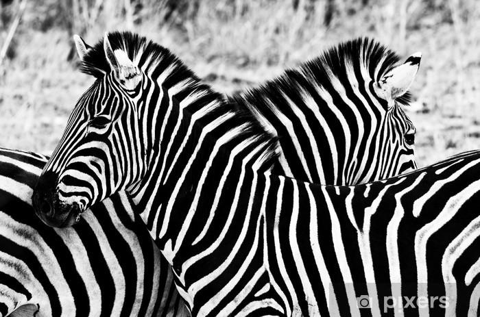 Naklejka Pixerstick Zebry w Kruger National Park, Republika Południowej Afryki - Style