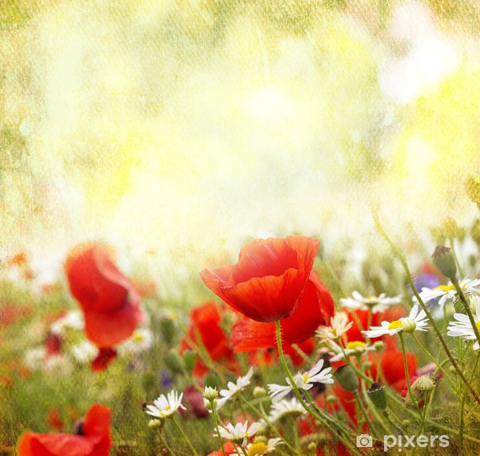 Poppy flowers Poster - Themes