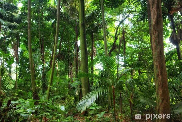 Smukke regnskov træer Vinyl fototapet - Naturens Vidundere