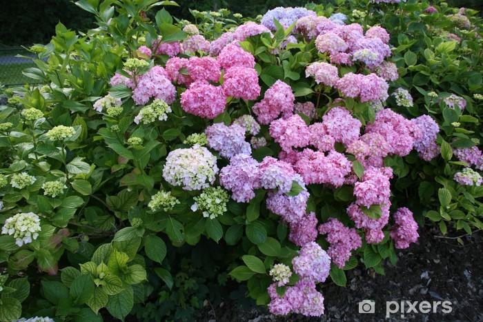 Fotobehang Hortensia Bleu Rose Hosting Zoom Belle Fleur Dehors