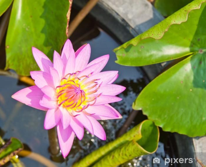 Vinyl-Fototapete Lila Wasser lilly auf dem Wasser Hintergrund mit Blättern. - Pflanzen