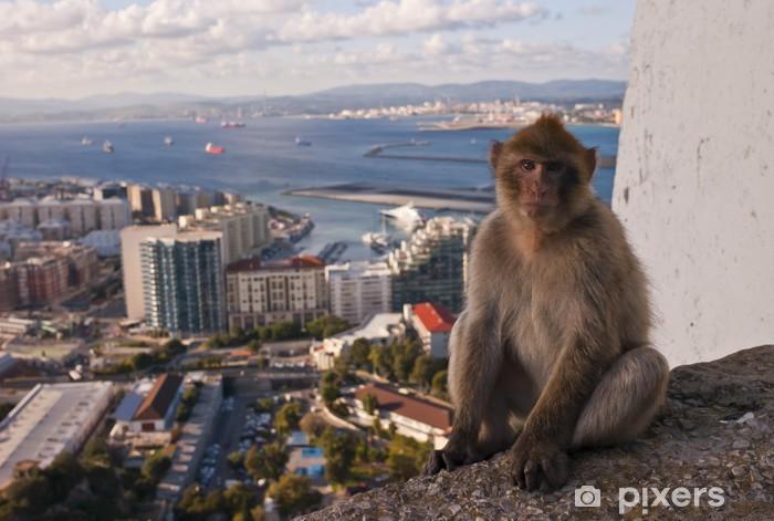 Nálepka Pixerstick Gibraltar opice - Evropa