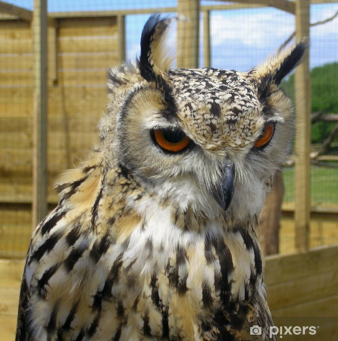 Twit, who? Pixerstick Sticker - Birds