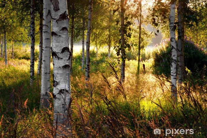 Vinilo Pixerstick Los árboles de abedul - Destinos