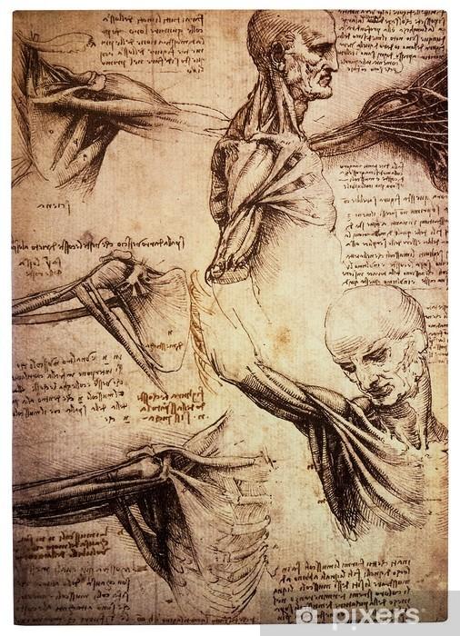 Vinyl Fotobehang Oude anamtomical tekeningen van Leonardo DaVinci - Gezondheid en Geneeskunde