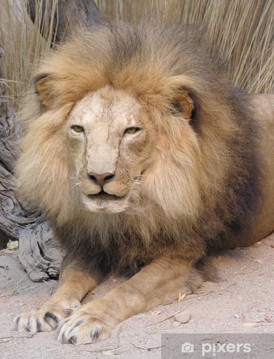 212e8739bf934 Papier peint Roi lion • Pixers® - Nous vivons pour changer
