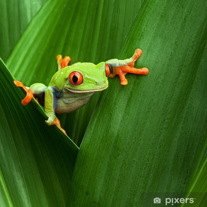 red eyed tree frog Pixerstick Sticker - Frogs
