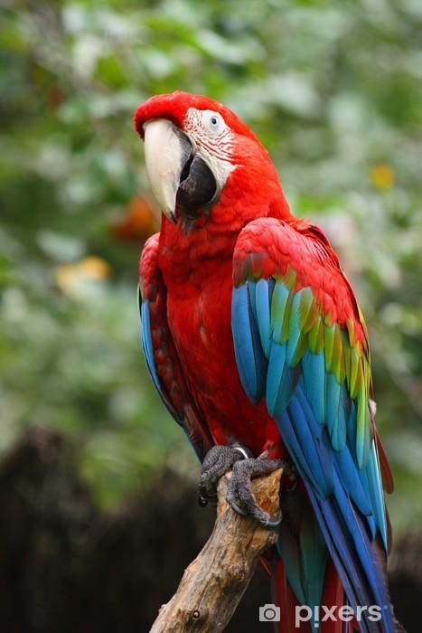 Fototapete Roten Und Gr 252 Nen Ara Papagei Pixers 174 Wir