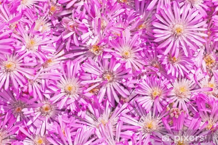 Naklejka Pixerstick Straw kwiat (Helichrysum) - Kwiaty