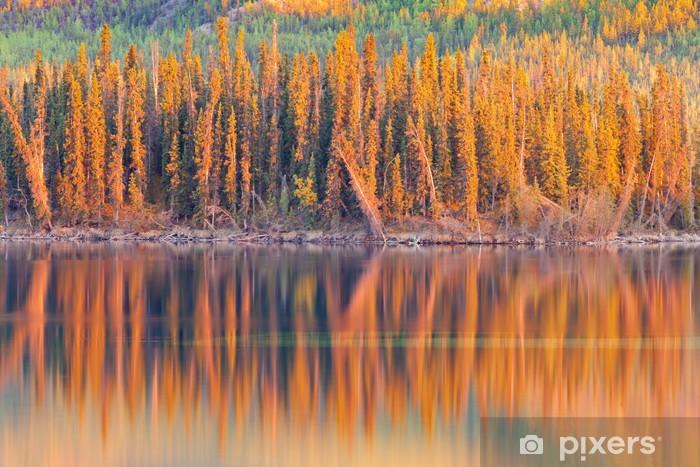 Fototapeta winylowa Refleksy słońca na borealnych lasów jezioro w Yukon - Ameryka