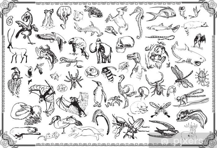 Vinyl-Fototapete Große Sammlung: die Tiere - Andere Andere