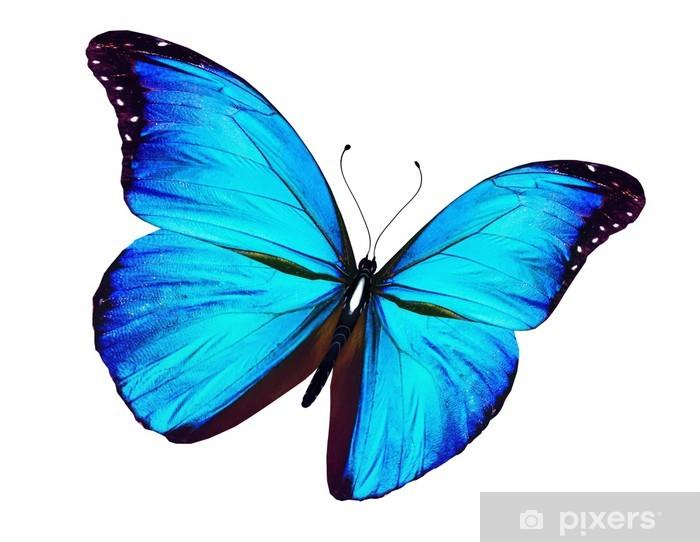 d35a054e2e9 Blå sommerfugl flyver, isoleret på hvidt Fototapet • Pixers® - Vi ...