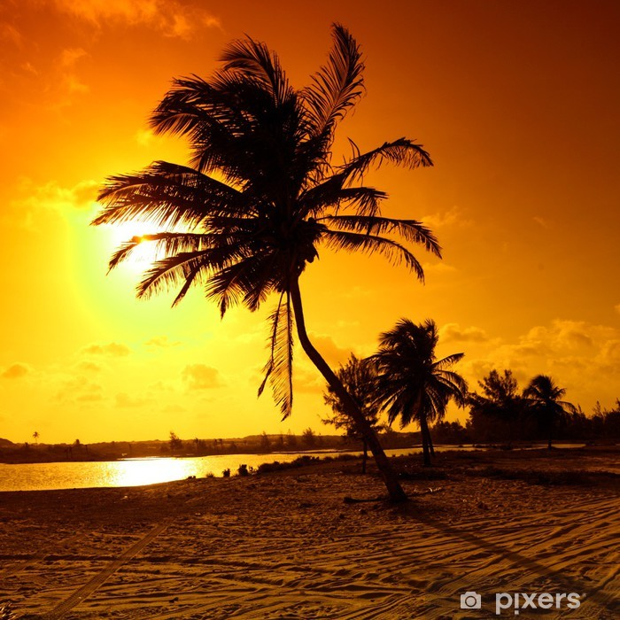 Papier peint vinyle Sunrise palmier - Thèmes