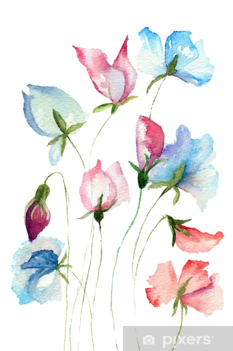 Sweet Pea Flowers Wall Mural Pixers We Live To Change