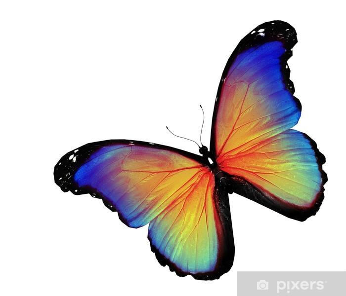 Carta Da Parati Farfalla Blu Giallo Su Sfondo Bianco Pixers