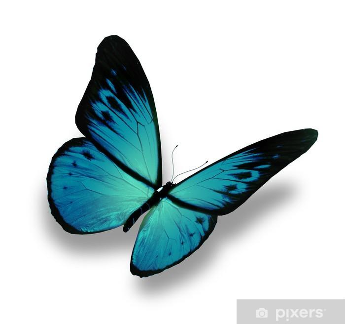 Carta Da Parati Farfalla Blu Volare Isolato Su Sfondo Bianco