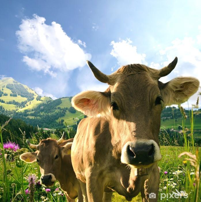 Fototapeta winylowa Krowy - Ssaki