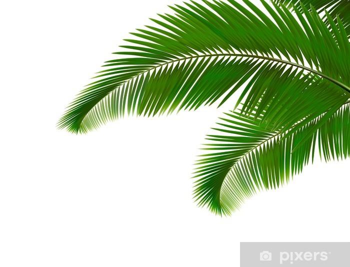 Papier peint vinyle Feuilles de palmier sur fond blanc. Vector. - Arbres et feuilles