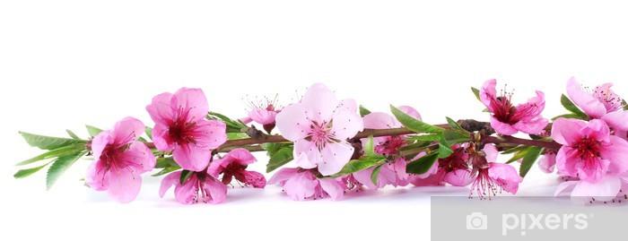 Nálepka Pixerstick Krásný růžový broskev květ izolovaných na bílém - Ovoce