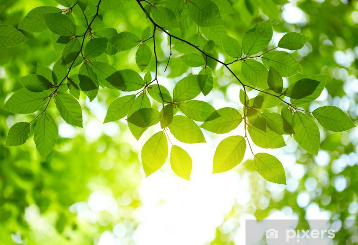 Fototapeta winylowa Zielonych liści w tle - iStaging