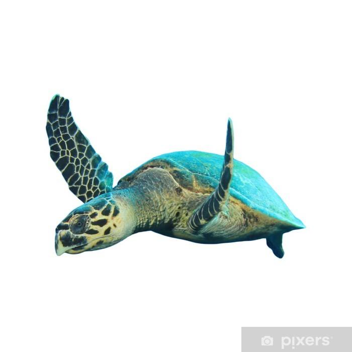 Carta da Parati in Vinile Hawksbill tartarughe marine isolate su bianco - Adesivo da parete