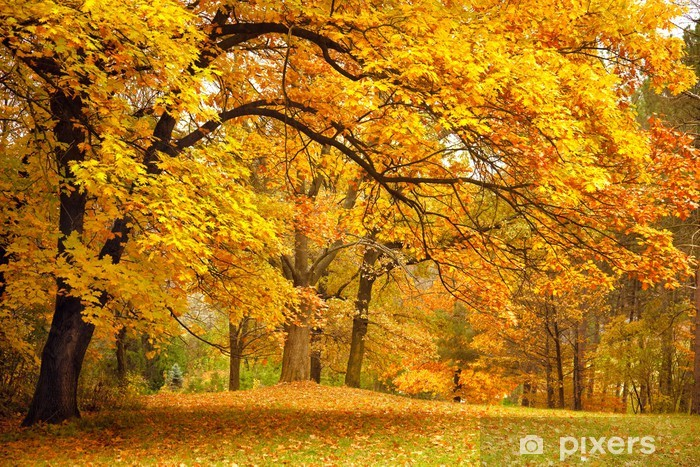 Autumn / Gold Trees in a park Vinyl Wall Mural - iStaging