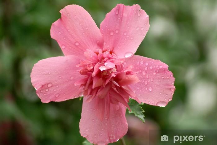 Papier peint vinyle Lavatera rose - Fleurs