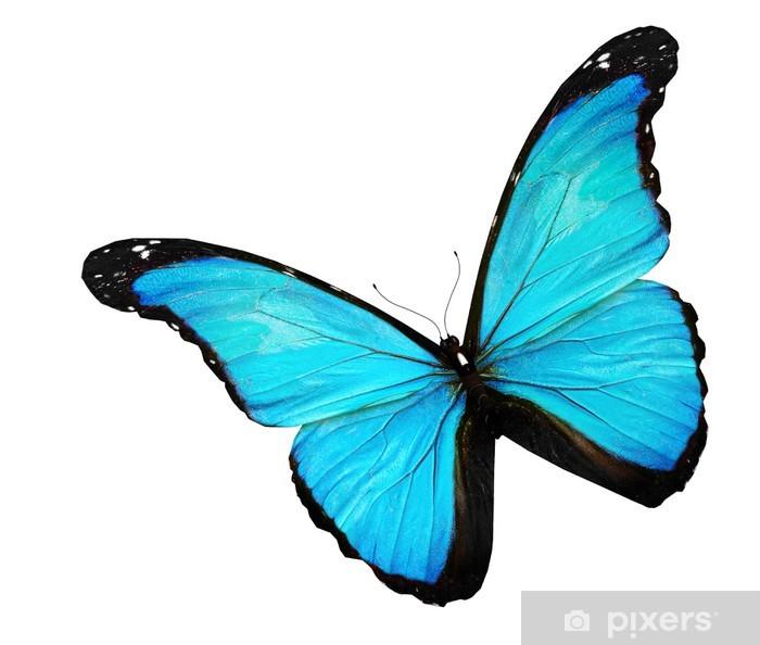 Carta Da Parati Farfalla Blu Su Sfondo Bianco Pixers Viviamo