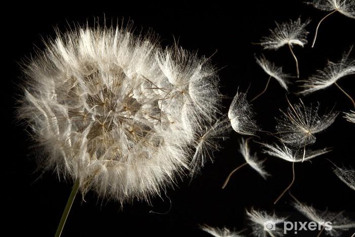 Carta da Parati in Vinile Perdere Dandelion Seeds in the Wind - Temi