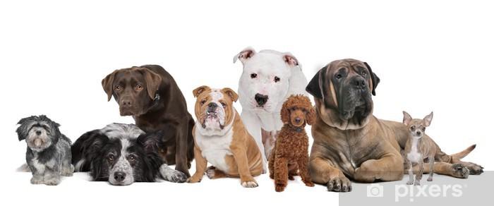 Fototapeta winylowa Grupa ośmiu psów - Naklejki na ścianę