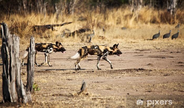 Fototapeta winylowa Dzikie psy - Afryka