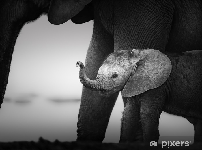 Baby Elephant next to Cow (Artistic processing) Vinyl Wall Mural - Styles