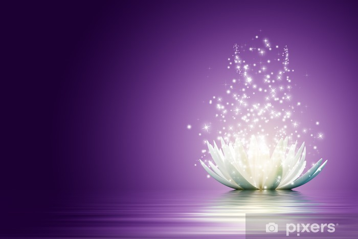 Fototapeta winylowa Kwiat lotosu - Style