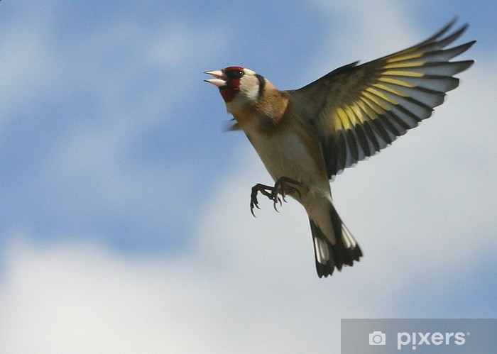 Pixerstick Aufkleber Stieglitz 02 - Vögel