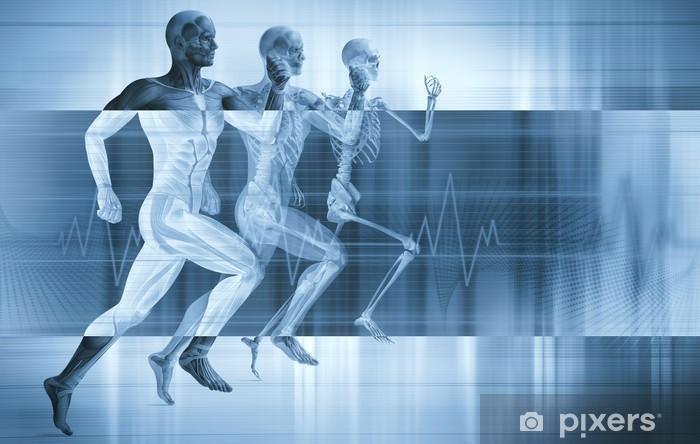 Vinyl Fotobehang Anatomie, spieren en sport concept - Gezondheid en Geneeskunde
