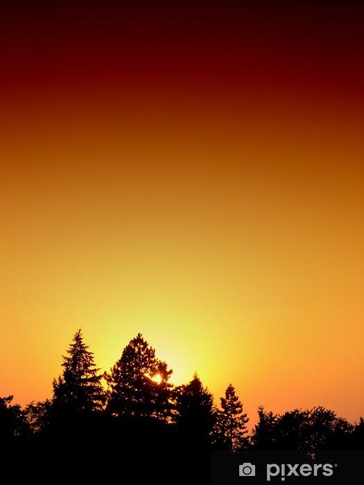 Fototapeta winylowa Zachód słońca nad lasem sosnowym. - Lasy