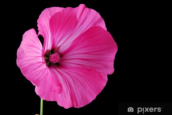Nálepka Pixerstick Lavatera květ - Květiny