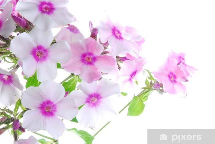 Sticker Pixerstick Fleurs blanche et rose - Fleurs