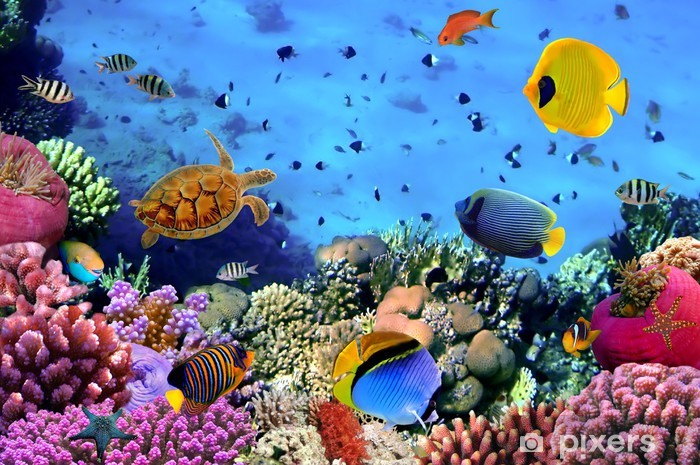 Photo of a coral colony Vinyl Wall Mural - Themes