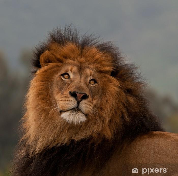Papier peint vinyle Portrait unique de lion - Thèmes