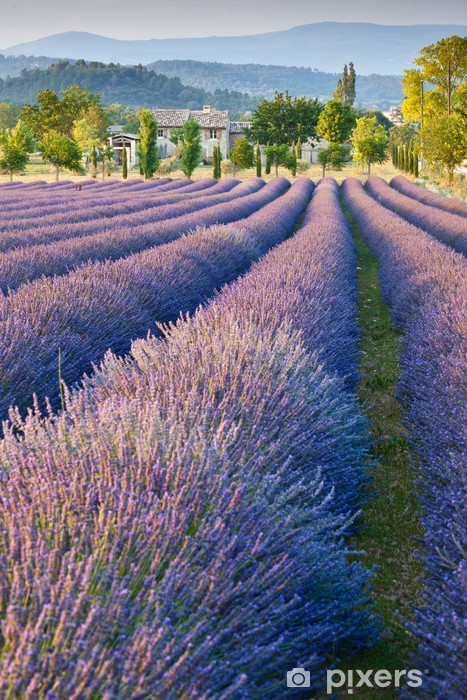 Lavender field in Provence Pixerstick Sticker -