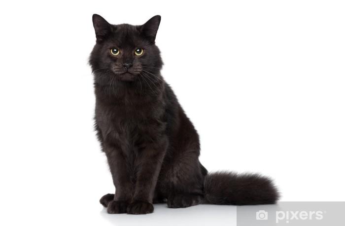 tvoje těsná kočička