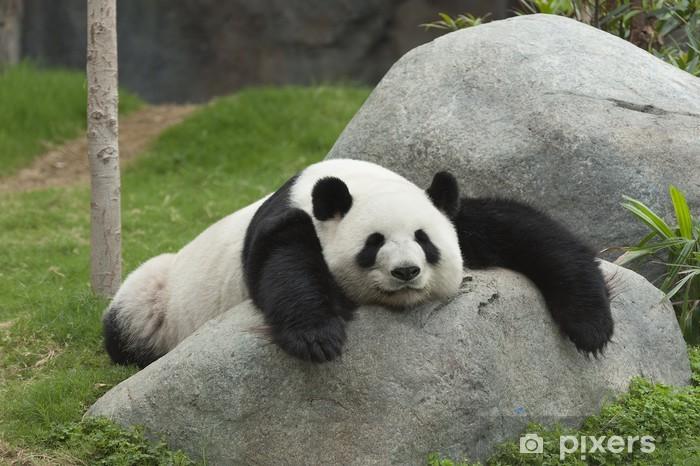 Fototapeta winylowa Panda bear spanie - Pandy